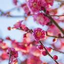 3/23 春期講習 新たなる旅立ち